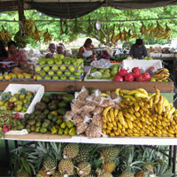 Abundant fresh produce at the daily San Ignacio Farmer's Market
